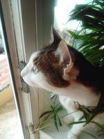 кот смотрит на улицу сидя на подоконнике возле лоджии
