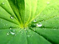Drops_On_Leaf_1600