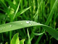 Drops_of_Rain_1600