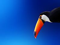 Exotic_Bird_1600