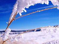 Frosted_1600