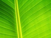 Green_1600