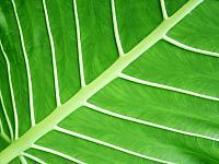 Leaf_1600