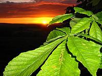 Sunset_Leaves2_1600